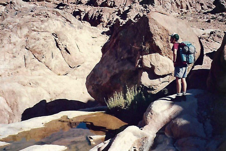 Scorpion in Sinai – Chance vs. Choice